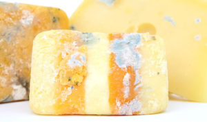 American Food Waste Rotten Cheese