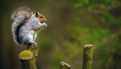Acorns-Investment-App-Squirrel
