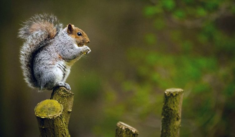 Acorns-Investment-App-Squirrel
